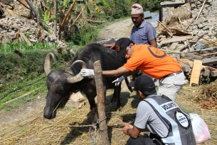 Animals in disasters: We respond quickly when a disaster strikes to ensure that animals aren't the forgotten victims, and help communities to better prepare for future disasters