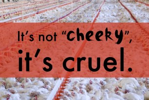 "An view from above of chickens in an overcrowded ban. Text on image says ""It's not cheeky, it's cruel""."