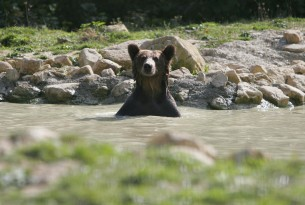 At long last...peace for Romanian bears