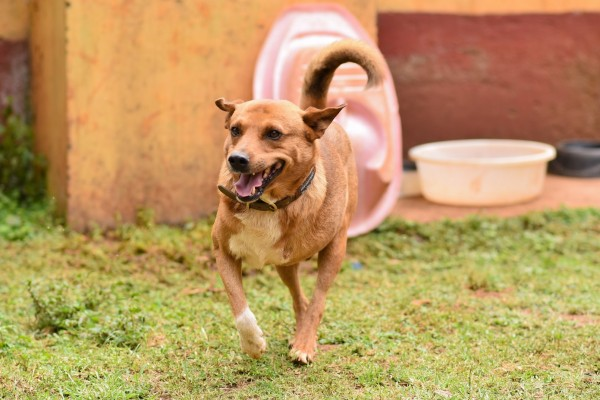 Dog at Kenya Society for the Protection and Care of Animals (KSPCA) - World Animal Protection