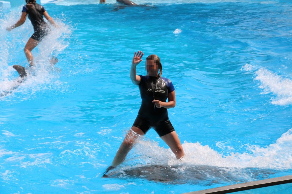 Dolphins in entertainment at Zoomarine Portugal - Wildlife. Not entertainers - World Animal Protection