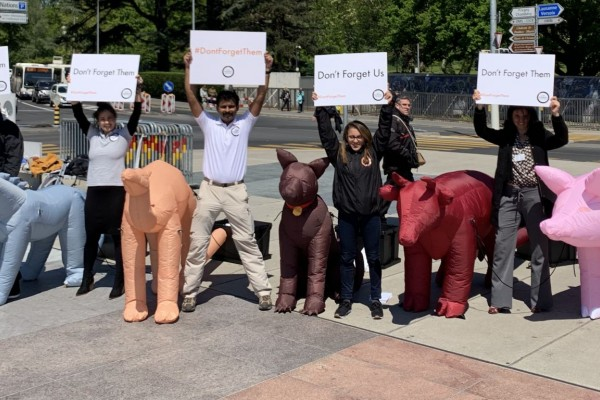 Inflatable animals in Geneva - World Animal Protection - Animals in disasters