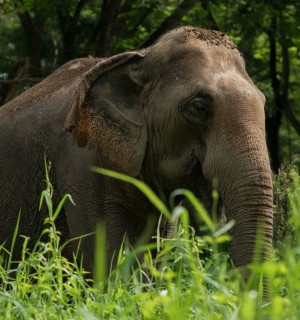 Elephant at a higher welfare venue - World Animal Protection - Wildlife. Not entertainers
