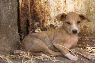 Why we need to act now to protect Sierra Leone's dogs