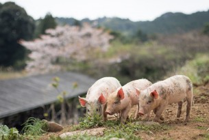 5 Ways to Help Farmed Animals in 2021