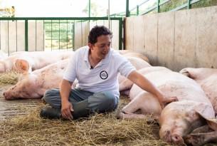 A man petting a pig in a high welfare farm