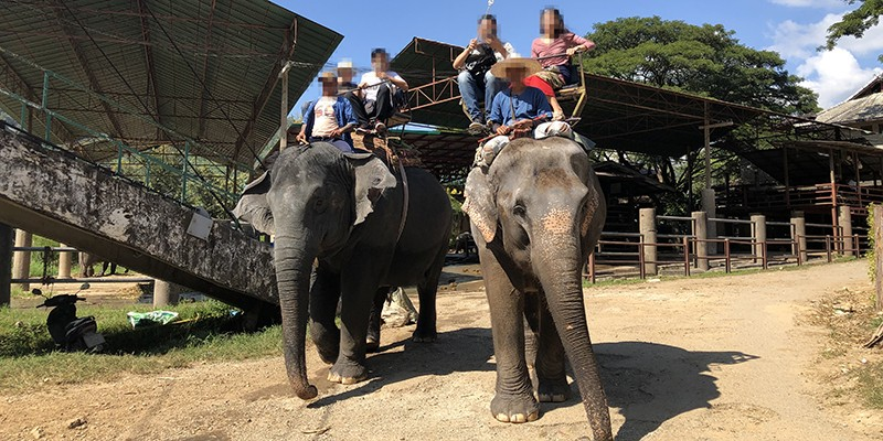 Tourists riding exploited elephants in Thailand.