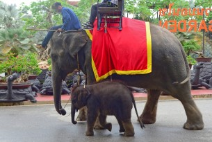 Tourists riding elephant at Nong Nooch Garden in Thailand