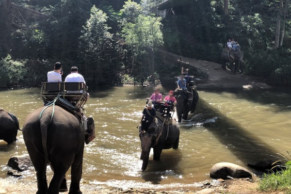 Elephants giving rides at Maetaeng elephant camp in Thailand. Credit line: world animal protection