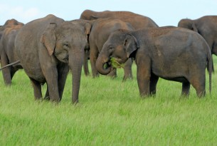We join forces with TUI Care Foundation to build a happier future for 1,500 elephants in South Asia