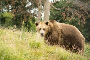 Celebrating eight years of protecting bears in Romania