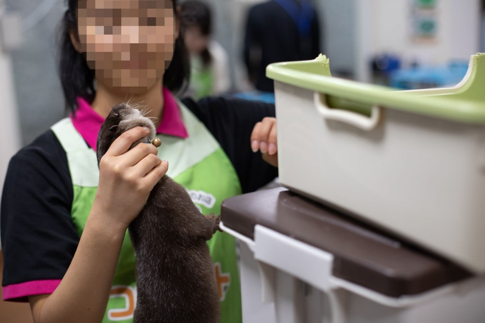 Asian otters are threatened by the growing pet trade