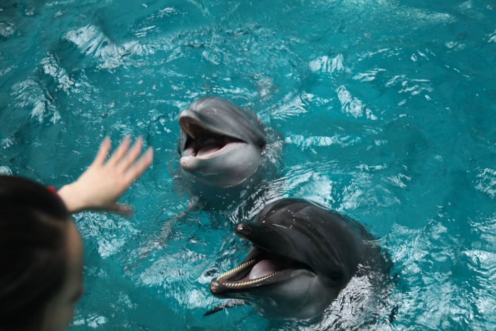 Dolphin suffering in captivity