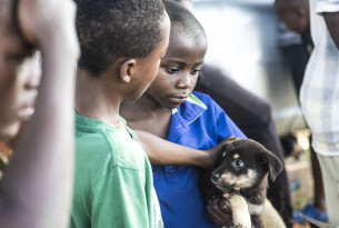 Young boys petting a dog in Mombasa.