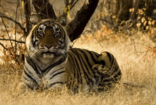 Oxford scientists' call to creative minds – Can you think for tigers?