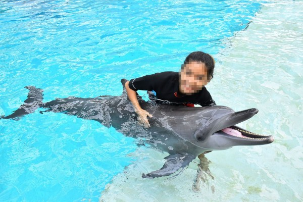 Pictured; A dolphin being used for photo opportunities at Resort World Sentosa, Singapore. Credit Line: World Animal Protection