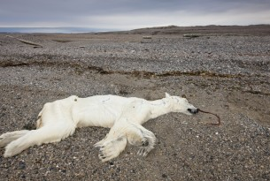 A polar bear who passed away