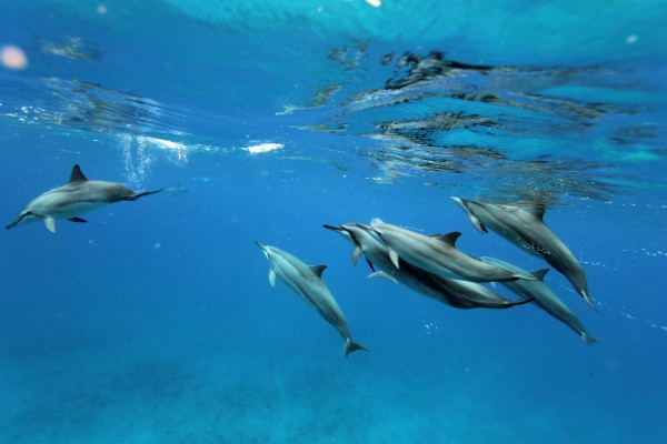 Dolphins - World Animal Protection
