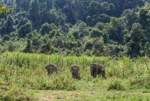 elephants, Thailand