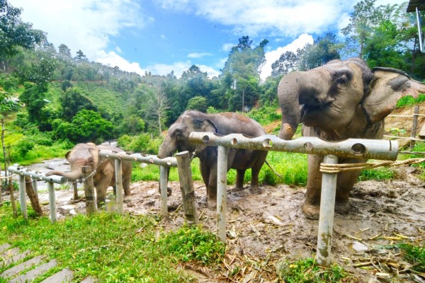 ChangChill, olifantenopvang, olifanten, entertainment, Thailand