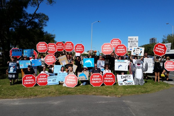 Protestors gather outside Sea World on the Gold Coast