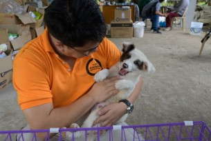 Naritsorn Pholperm (Disaster Management, Project Manager) at an animal rescue shelter in the city of Lipa, Batangas