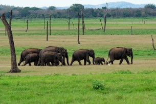 Tips to spot an elephant-friendly venue