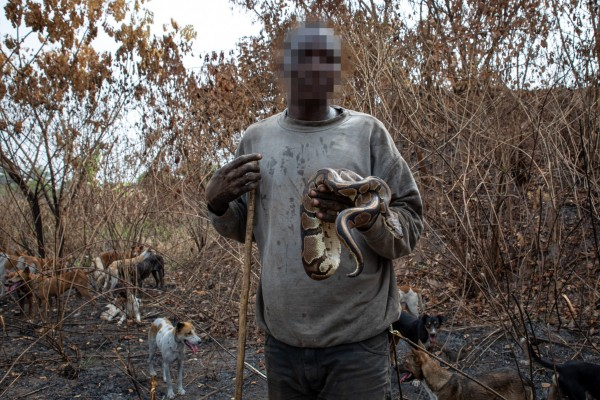 Bll python caught by hunter - photo by Aaron Gekoski for World Animal Protection