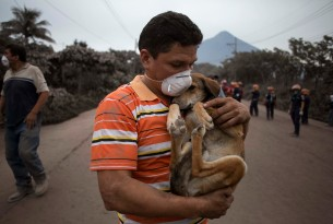 Guatemala: we're racing to save thousands of animals after deadly Volcano of Fire erupts