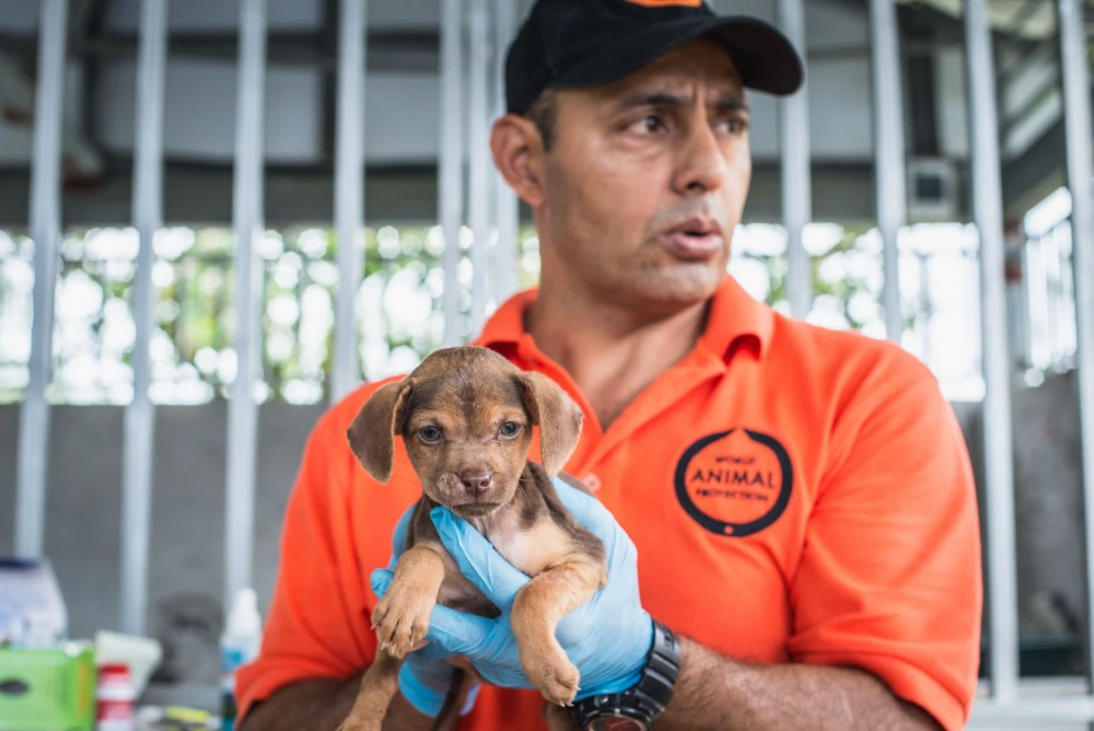 Sergio Vásquez holding a dog in the Parismina community of Limon, Costa Rica - Animals in disasters - World Animal Protection