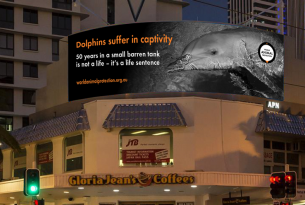 World Animal Protection dolphin billboard in Surfers Paradise