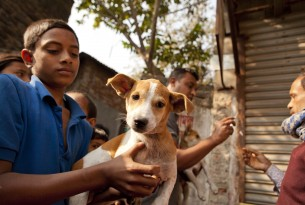 Working with strays a humane alternative