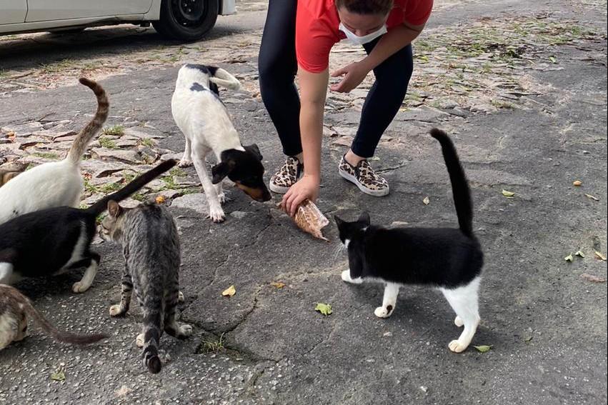 Voluntária alimenta gatos e c?es em rua em Fortaleza, Ceará