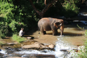 Elephant in the river at ChangChill