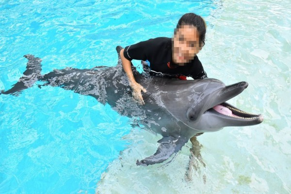 A dolphin being used for photo opportunities at Resort World Sentosa, Singapore. Credit Line: World Animal Protection