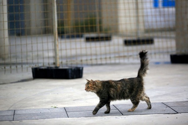 Rio 2016: Rescuing over 100 cats from Maracanã Stadium