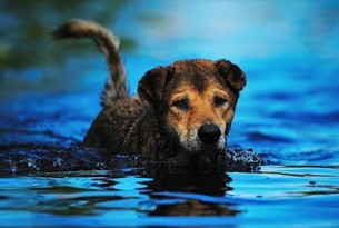 Dog in water - World Animal Protection
