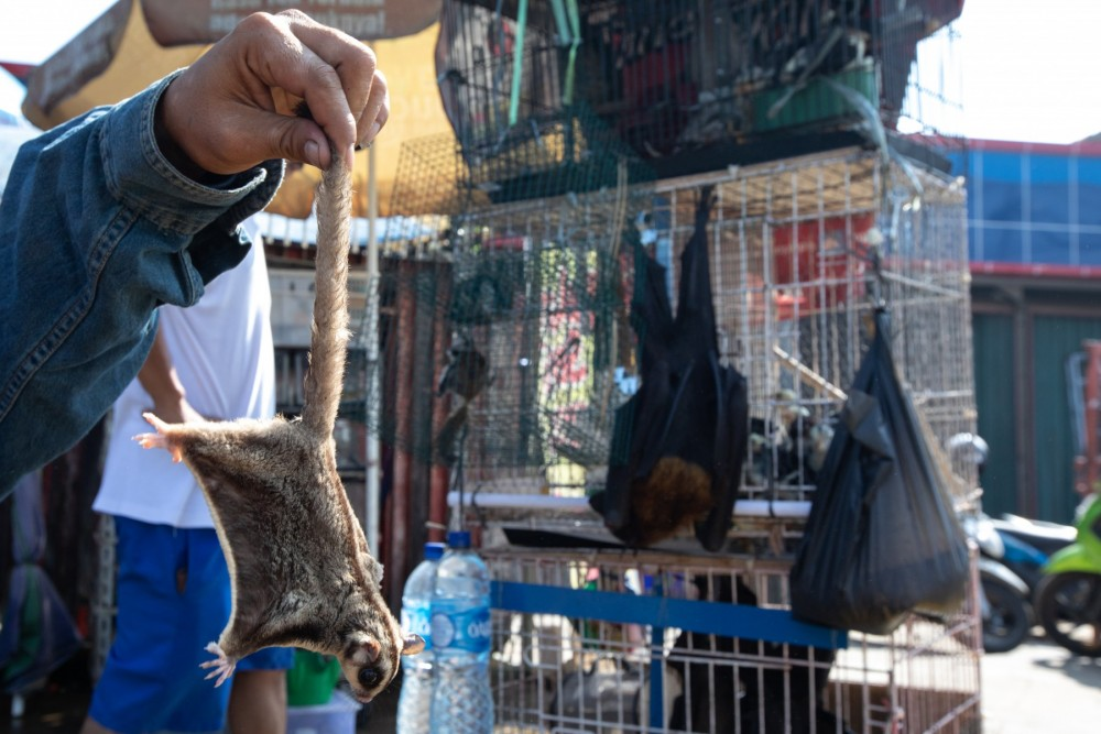 A sugar glider and bat at a market in Jakarta, Indonesia. Credit Line: World Animal Protection / Aaron Gekoski