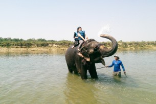 An elephant used for riding and bathing with tourists, Chitwan, Nepal - World Animal Protection