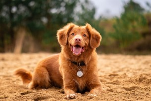 Dog sitting in the sand