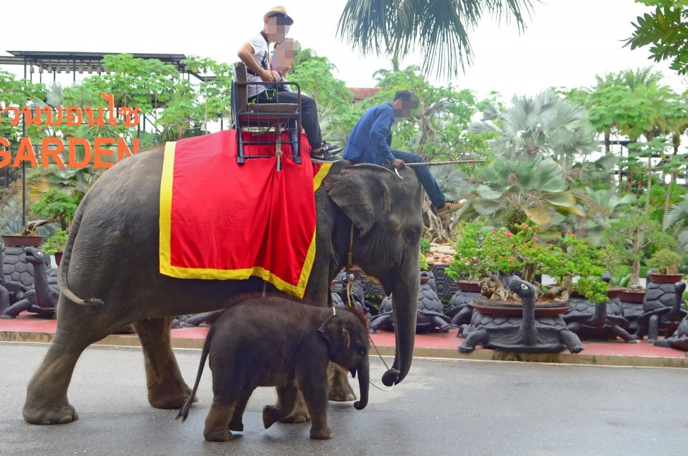 Baby elephant in a low welfare venue