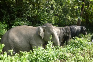 Elephants Tanwa, Sow, and Jahn at the Following Giants venue