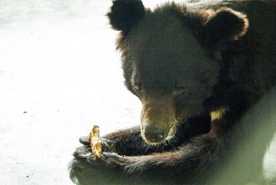 2 bears rescued