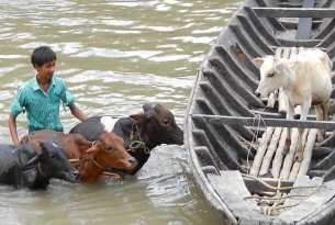 Animals in disasters: We move fast to protect animals affected by disasters–reducing suffering and helping communities to recover and rebuild.