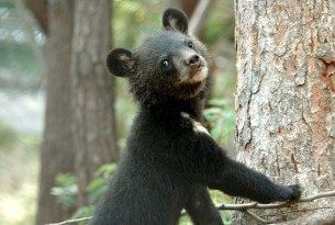 How you are phasing out bear bile farming in South Korea