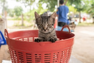 Cat in a bucket waiting to get vaccinated