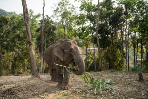 Olifanten bij Happy Elephant Care Valley
