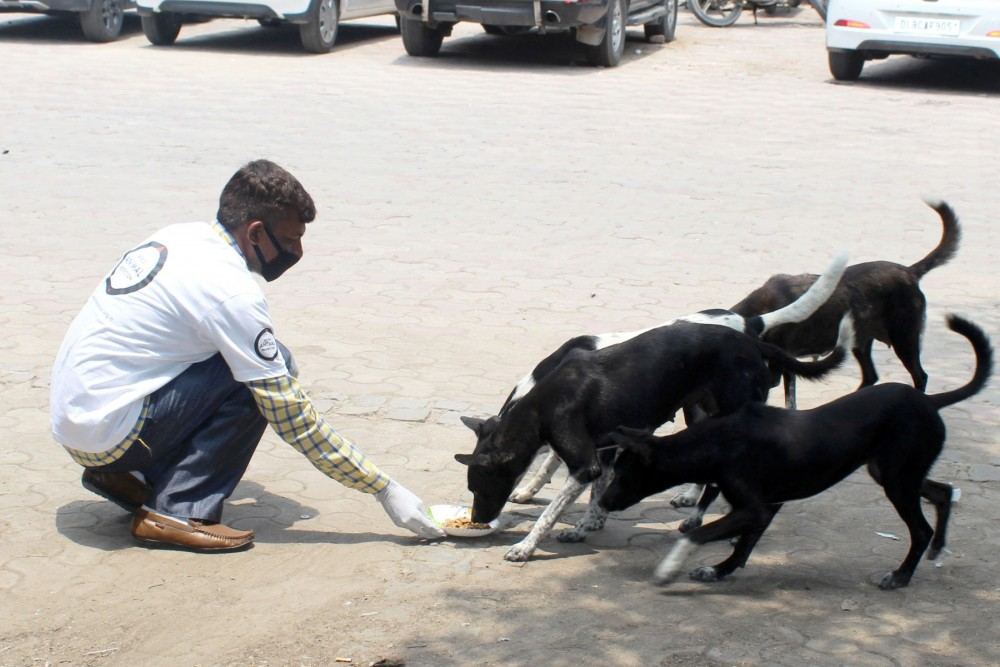 Dogs being fed during a feeding drive in the north of Delhi