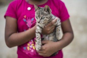 5 ways you've helped cats in need