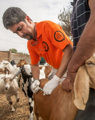 World Animal Protection vet JC Murillo was deployed to the Atacama region of Chile after recent flooding